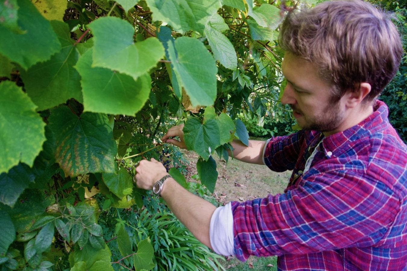 Foraging with Tobyn Excell Kent