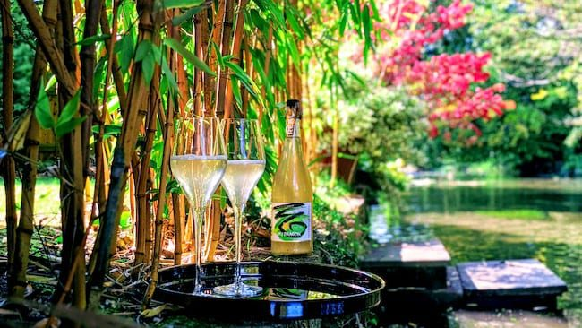 REAL Kombucha Dry Dragon 750ml bottles served on the edge of a river amongst bamboo plants